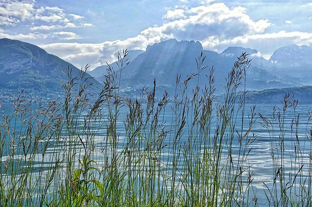 Reeds, Water, Lake, Mountains, Landscape, Grass