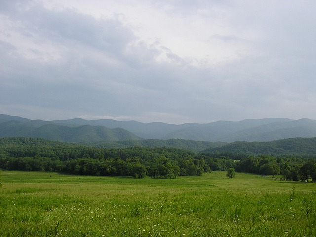 Mountains, Tennessee, Field, Fog, Trees, Meadow