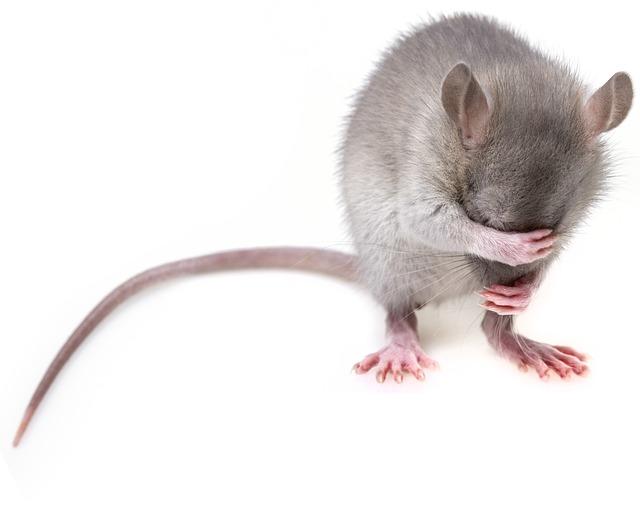 Mouse, Rodent, Rat, Mice, Pest