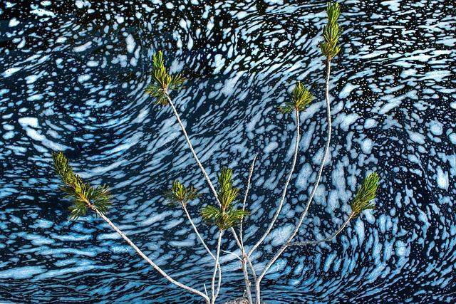 Landscape, Plant, Nature, Brazil, Rio, Movement, Blue