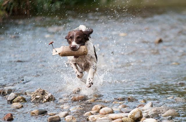 Dog, Water, Run, Movement, Joy