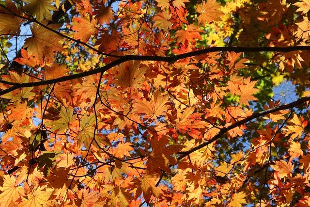 Mt Seoraksan, Fall Foliage, Autumn Leaves