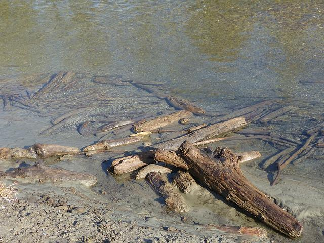 Drift Wood, Dead Wood, Water, Waters, Bank, Mud, Wood