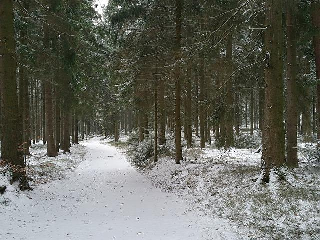 Forest, Mühlviertel, Winter, Nature, Plant