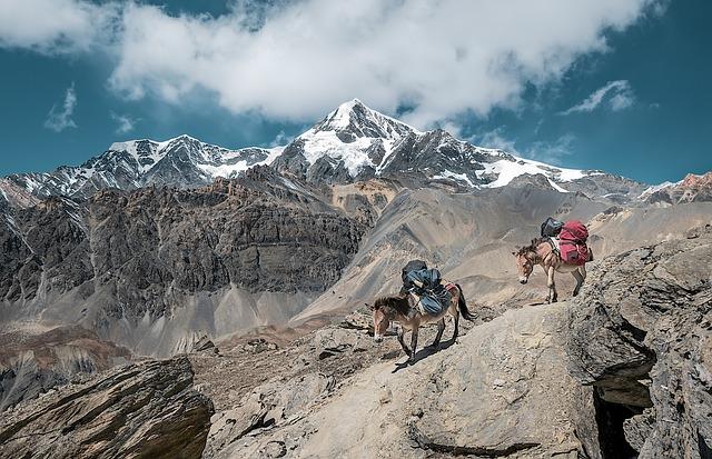 Mountain, Nature, Mules, Transport, Donkey
