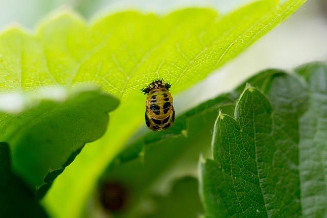 Larva, Ladybug, Mummy Doll, Twenty-two Point, Doll