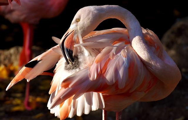 Flamingo, Bird, Colorful, Tierpark Hellabrunn, Munich