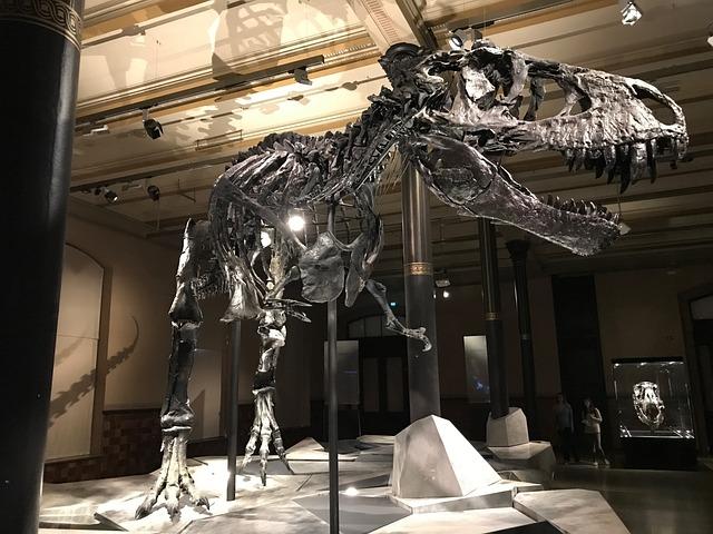 Dinosaur, Museum, T Rex, Skeleton, Evolution, Nature