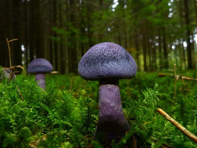 Mushroom, Autumn, Violet, Blue, Forest Floor, Moss