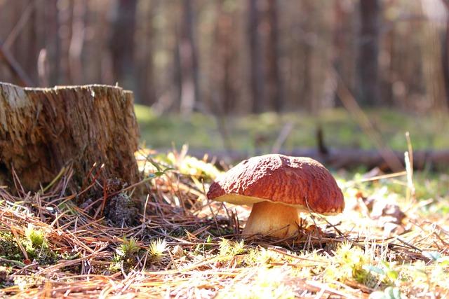 Boletus, Boletus Edulis, Mushroom, Healthy, Mushrooms