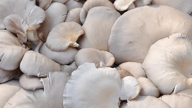 Mushroom, Oyster, Food