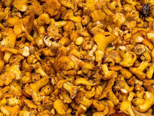 Mushrooms, Food Mushrooms, Mushroom, Eat, Forest