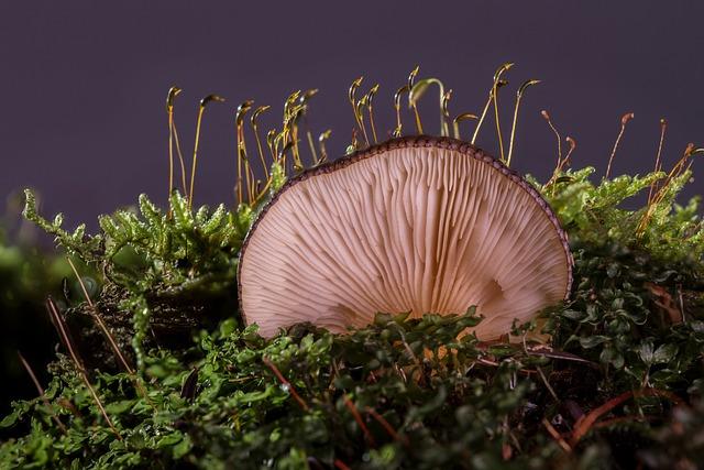 Mushroom, Agaric, Forest Mushroom, Oyster Mushroom