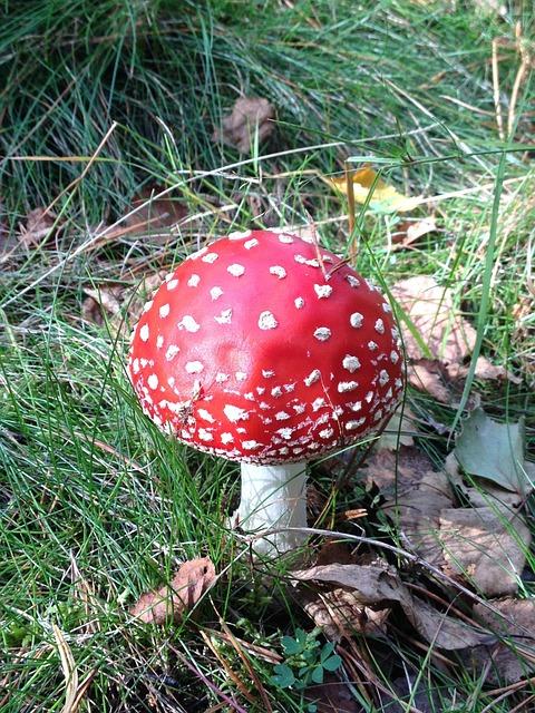 Mushroom, Fungus, Fungi, Raw, Autumn, Organic, Plant
