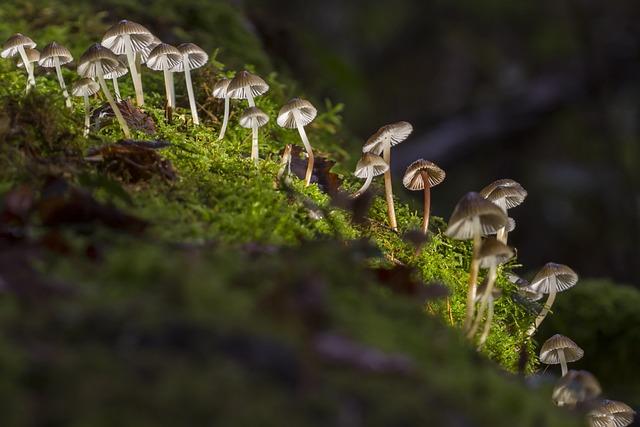 Mushroom, Mini Mushroom, Mushroom Group, Sponge