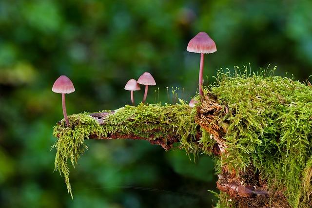Mushroom, Moss, Mini Mushroom, Sponge, Autumn