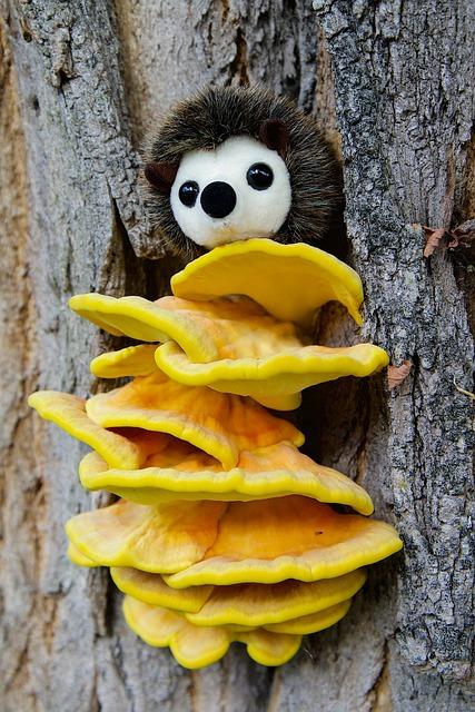 Nature, Tree, Tree Bark, Mushroom, Sulphur Ovinus