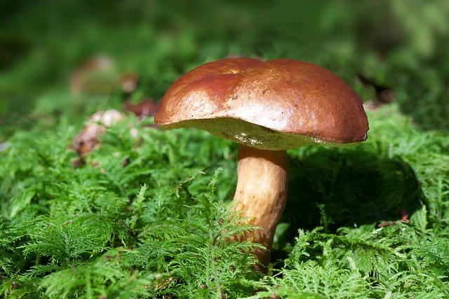 Gathering, Mushroom, Rac, Boletus Badius, Blue Mushroom