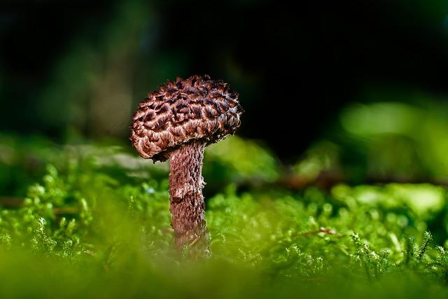 Shock-headed Boletus, Mushroom, Rac, Forest Mushroom