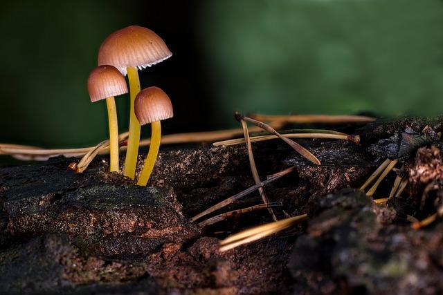 Mushroom, Mushrooms, Sponge, Small Mushroom