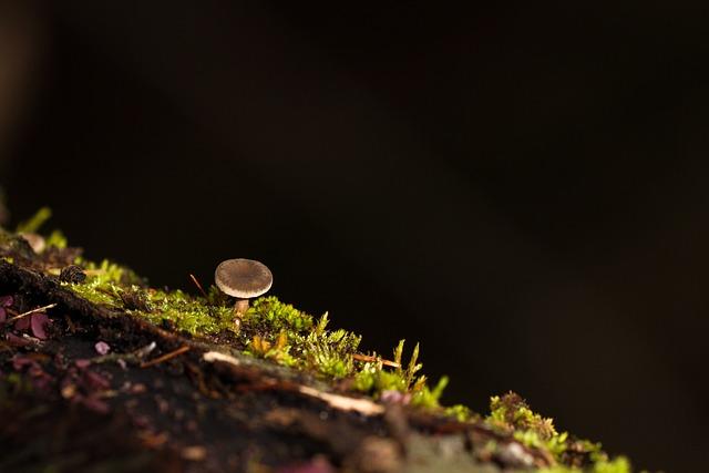 Mushroom, Moss, Tree Fungus, Sponge