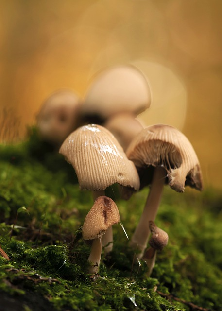 Mushrooms, Mushroom Group, Forest, Moss, Nature, Autumn