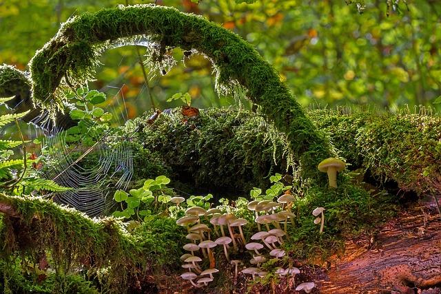 Mushrooms, Moss, Strunk, Cobweb, Mossy Branch