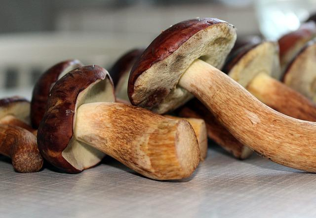 Brown Chestnut Boletus, Mushrooms Edible, Mushrooms