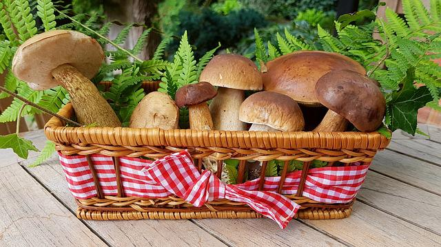 Mushrooms, Food Mushrooms, Forest Mushrooms, Basket