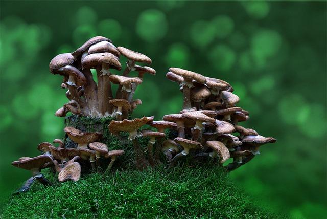 Mushrooms, Forest, Toxic, Mushroom Picking, Nature