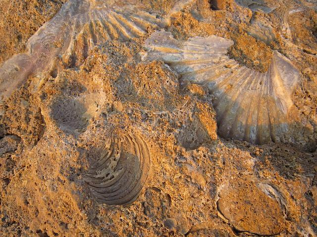Petrification, Fossilized, Mussels, Beach, Shells