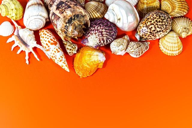 Mussels, Marine Gastropods, Travel, Background, Fund