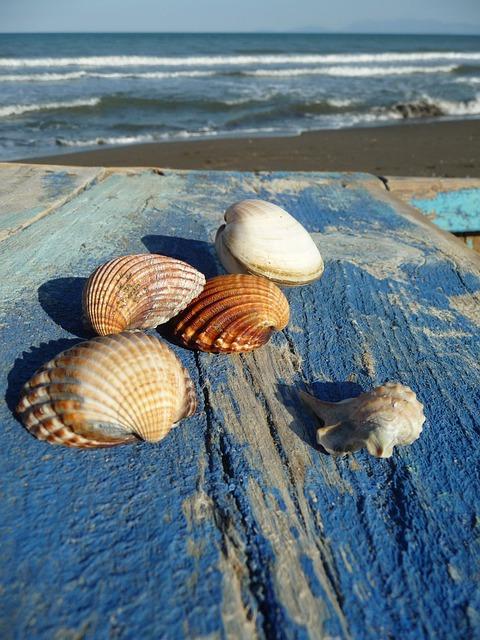 Sea, Mussels, Mussel Shells, Vacations, Flotsam