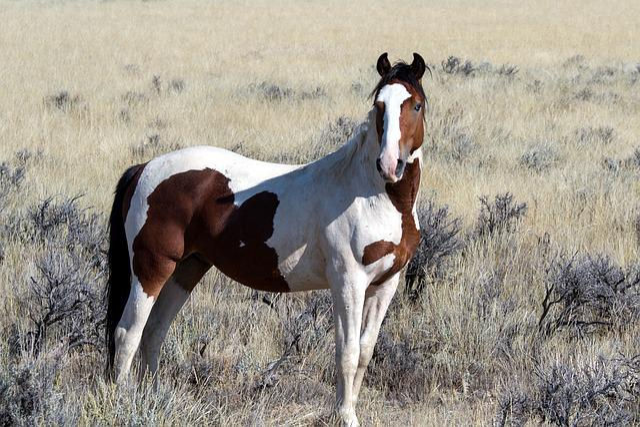 Wild Horses, Wild Mustangs, Mustangs, Horses