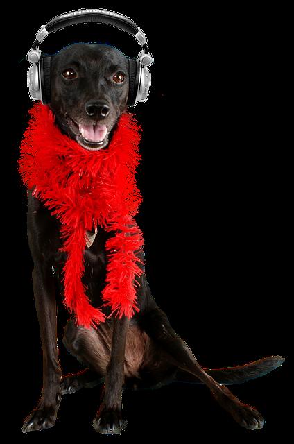 Dog, Black Dog, Pet, Mutt, Black, Animal, Cute, Canine