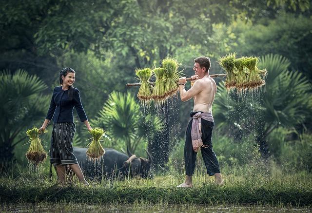 Pet, Golf, With Growth, Harvesting, Hope, Myanmar Burma
