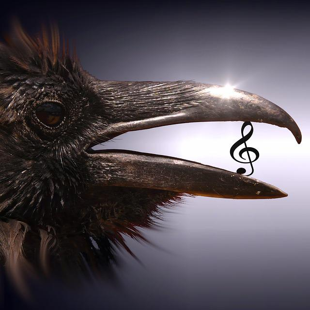Cd Cover, Bird, Clef, Surreal, Magic, Mysterious