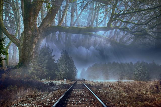 Forest, Fog, Trees, Landscape, Mysterious, Dark, Vias