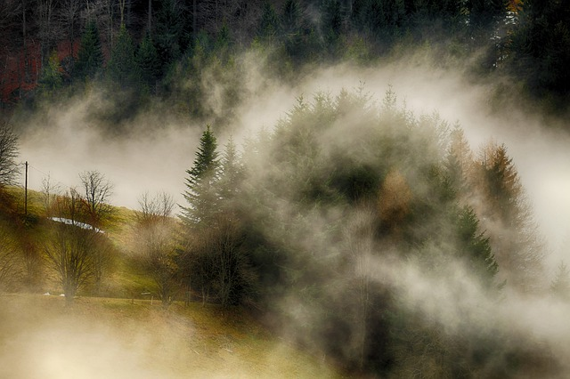 Fog, Rising Fog, Steam, Atmospheric, Silent, Mysterious
