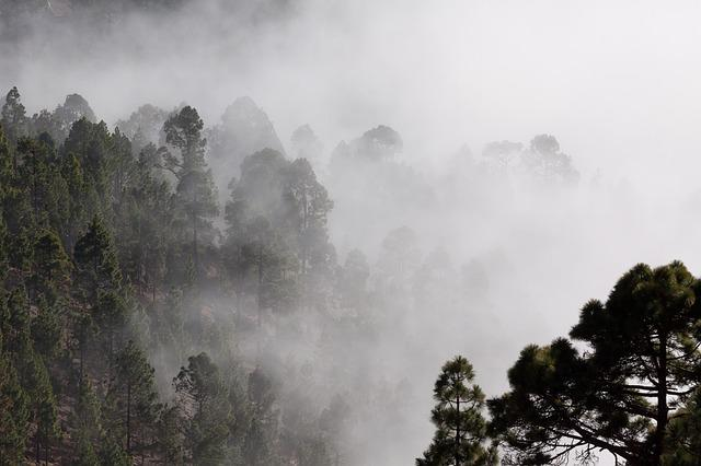 Fog, Outlines, Pine, Trees, Mysterious, Landscape