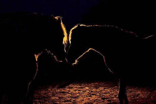 Night, Dark, Horses, Black, Mystery, Together, Light