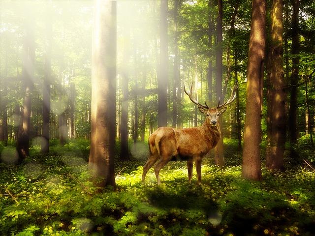 Magic Forest, Atmosphere, Mystical, Mood, Landscape