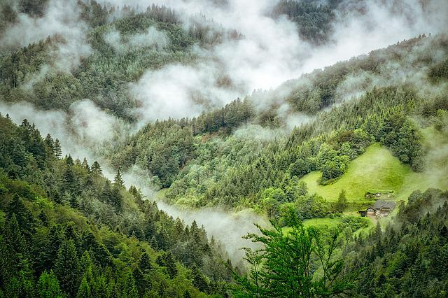 Black Forest, Fog, Clouds, Mystical, Forest, Nature
