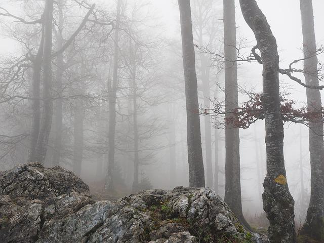 Forest, Book, Foggy, Haunting, Mystical, Beech Wood