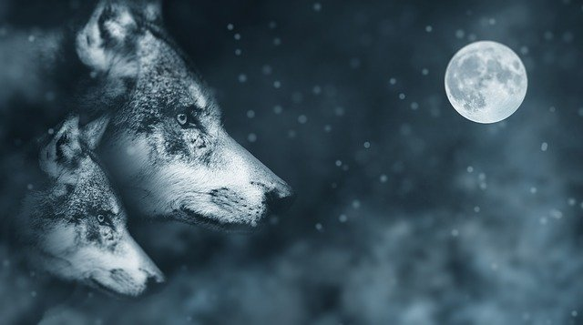 Wolf, Moon, Night, Atmosphere, Mystical, Moonlight