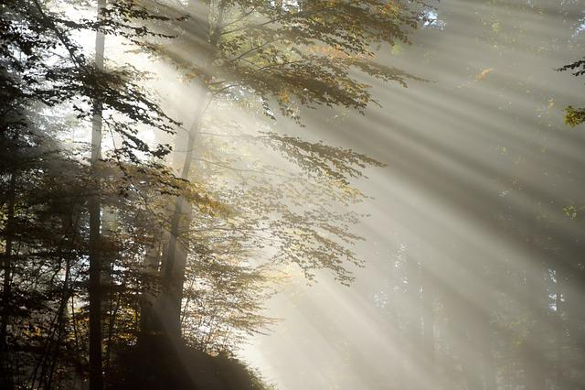 Rise, Morning, Fog, Sunbeam, Striped, Mystical