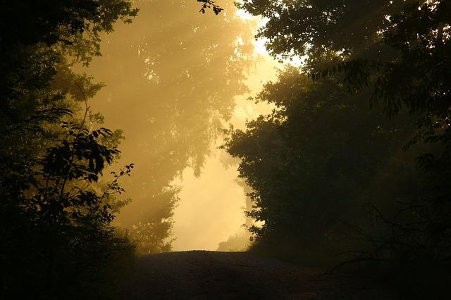 Away, Fog, Trees, Forest, Mood, Autumn, Mystical, Sun