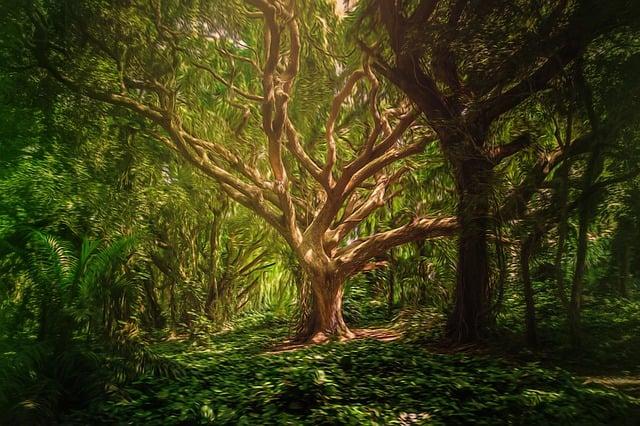 Background, Forest, Trees, Digital Art, Mystical
