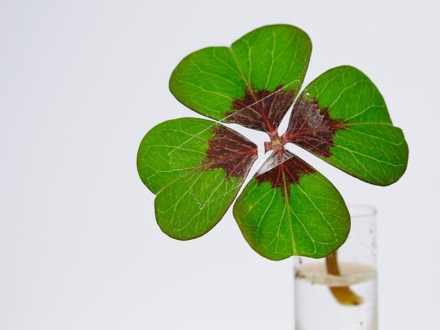 Four Leaf Clover, Luck, Nachgeholfen, Misfortune, Klee