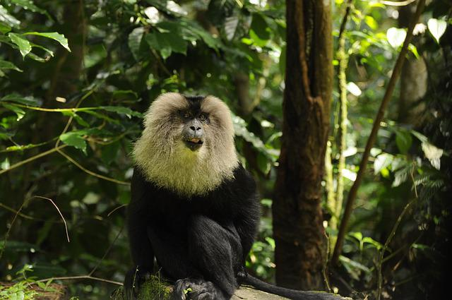 Nagaraja Papanna, Np Photography, Lion Tailed Macaque